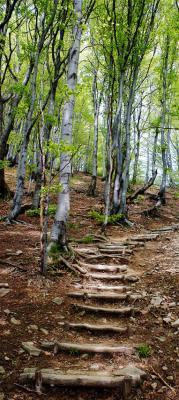 stopnie-wsrod-drzew