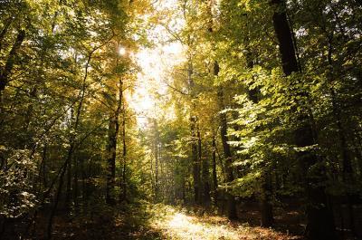 droga-przez-las