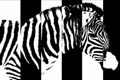 paski-zebry