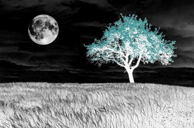 turkusowe-drzewo-i-ksiezyc-w-pelni