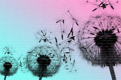 dmuchawce-w-pastelowych-kolorach