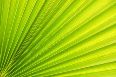 zielony-wachlarz