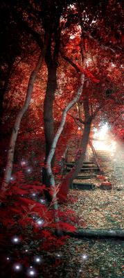 czerwone-drzewa-w-lesie