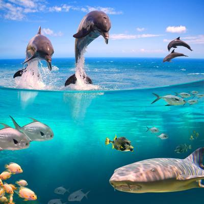 zycie-w-oceanie