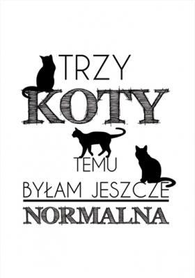 trzy-koty-temu-bylam-jeszcze-normalna