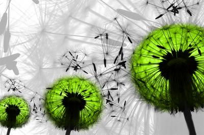 trzy-zielone-dmuchawce