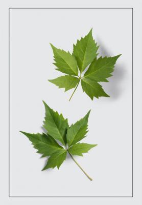 dwa-zielone-listki