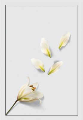 biala-lilia