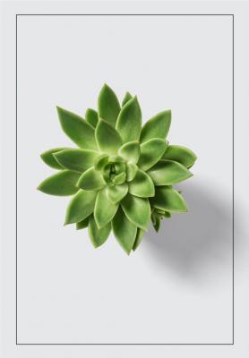 zielony-skalniak