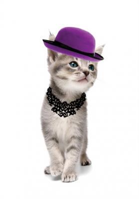 kotek-w-fioletowym-kapeluszu