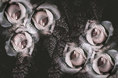 gotyckie-roze