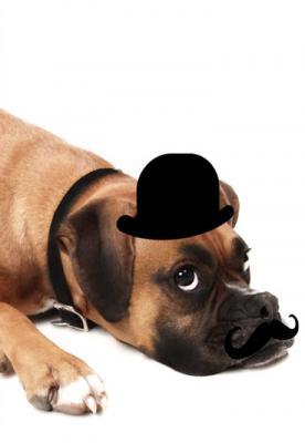 piesek-w-kapeluszu