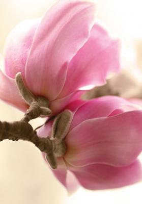 grafika-rozowy-kwiat