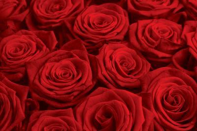 bukiet-czerwonych-roz