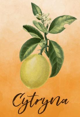 owoc-cytryna
