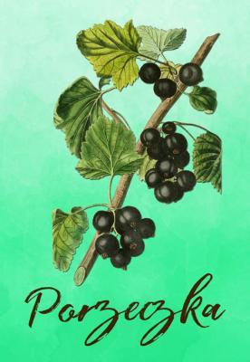owoc-porzeczka