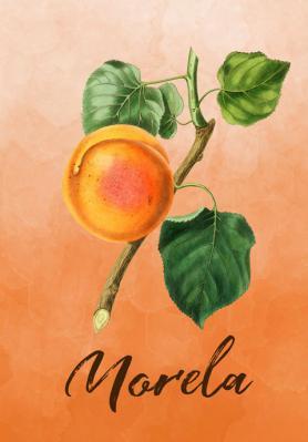 owoc-morela