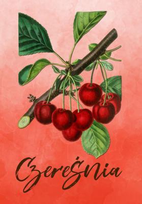 owoc-czeresnia