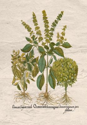 motyw-ziol-bazylia