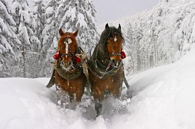 konie-galopujace-po-sniegu